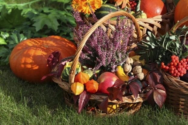 Ricette cosmesi e idee green per l'autunno